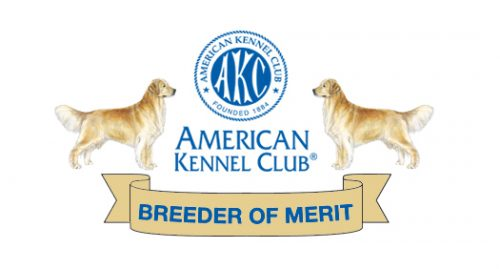 Texas Golden Retriever Breeders Of Merit