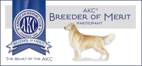 Texas Golden Retriever Puppy Breeders Of Merit