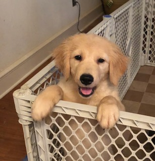 Texas Sales Tax For Dogs